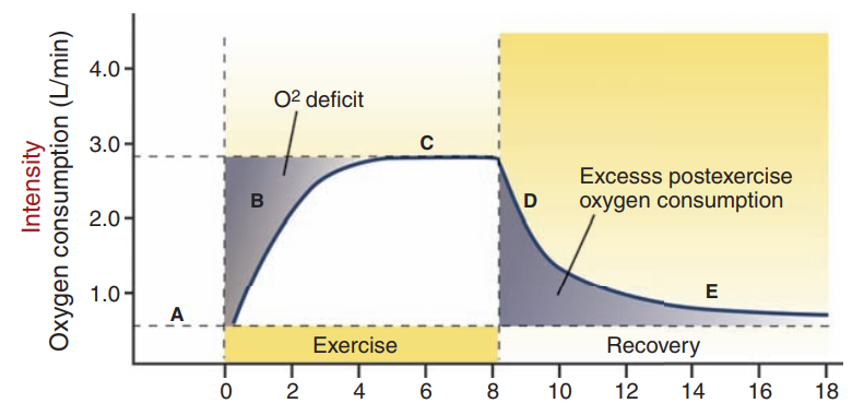 A figure describing excess post exercise oxygen consumption