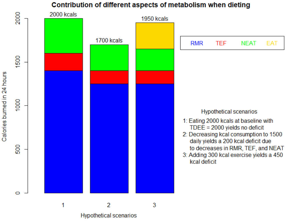 figure showing the magnitude that various aspects of metabolism change when dieting