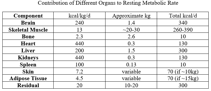 table showing contribution of different organs to resting metabolic rate
